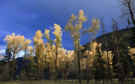 Картинки лес, осень, небо