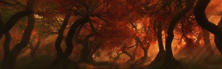 Фото осень, деревья, тень, лучи