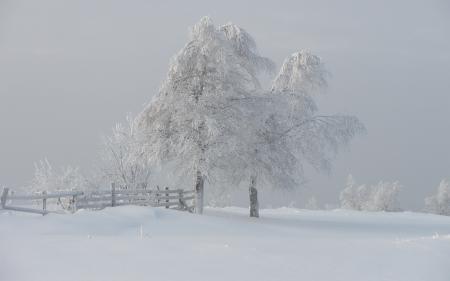 Фотографии зима, деревья, туман, снег