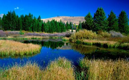 Фотографии Пейзаж, природа, лес, озеро