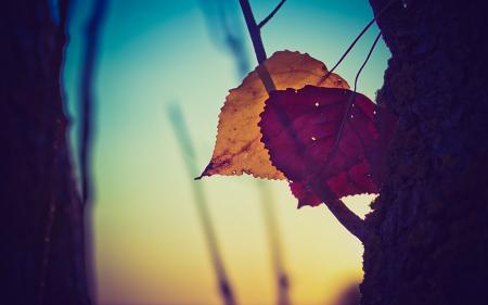Фото закат, листья, деревья