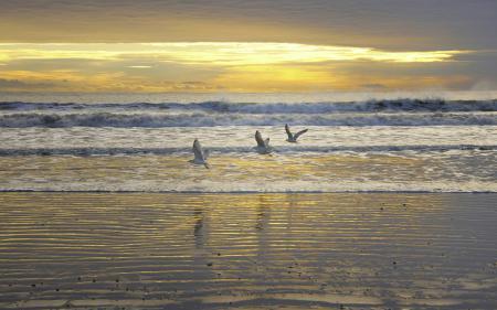Картинки закат, море, птицы, небо