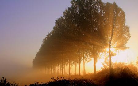 Фотографии утро, деревья, свет