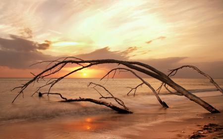 Обои море, закат, деревья, пейзаж