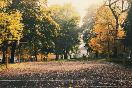 Картинки осень, деревья, кольца, баскетбольные