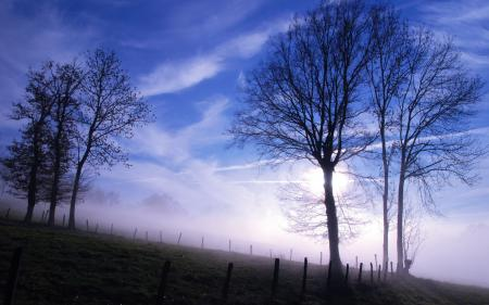 Картинки утро, туман, деревья, небо