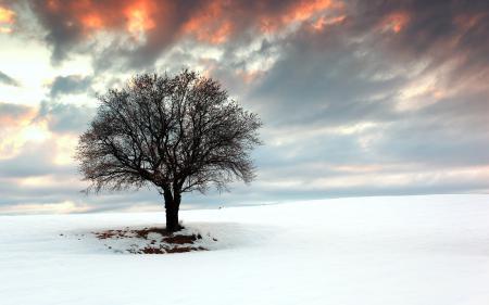 Картинки дерево, поле, снег, пейзаж
