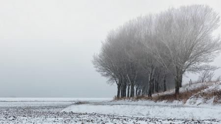 Фотографии поле, снег, пейзаж