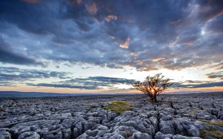 Фотографии закат, поле, камни, дерево