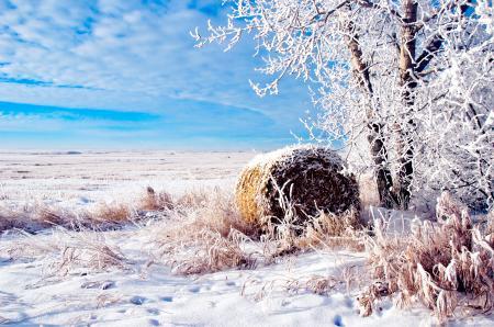 Заставки Пейзаж, Поле, Иней, Снег