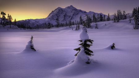 Заставки природа, зима, снег, ёлки