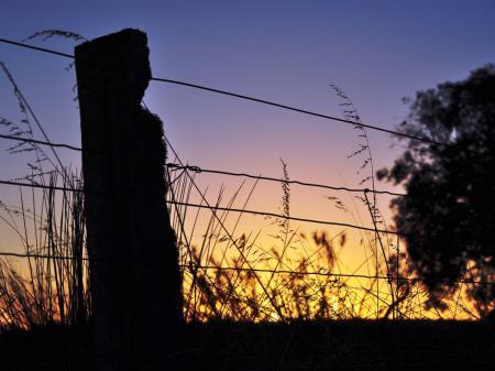 Обои природа, макро, закат, проволка