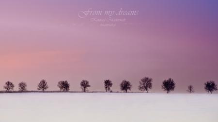 Фотографии from my dreams, зима, деревья