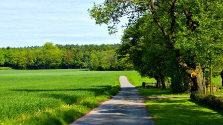 Фото лето, буйство зелени, дорожка, возле поля