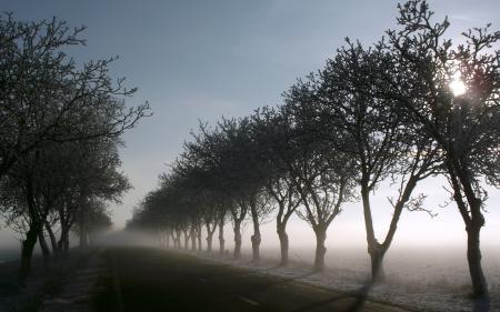 Картинки дорога, утро, туман, деревья