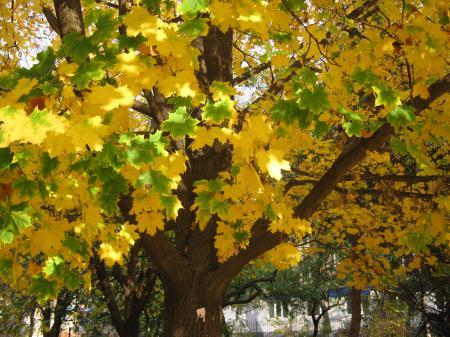 Заставки осень, листья, жёлтый, деревья