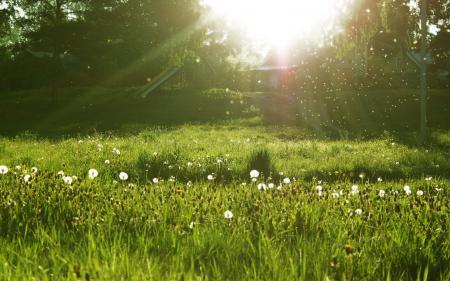 Картинки одуванчики, лето, трава, солнце