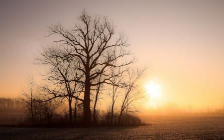 Заставки утро, туман, поле, пейзаж