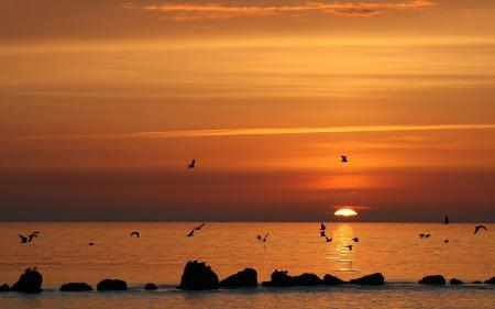 Фотографии море, закат, чайки