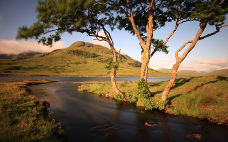 Фотографии река, деревья, природа, пейзаж