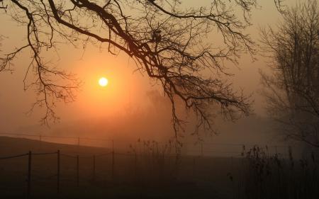 Заставки ночь, туман, дерево, природа