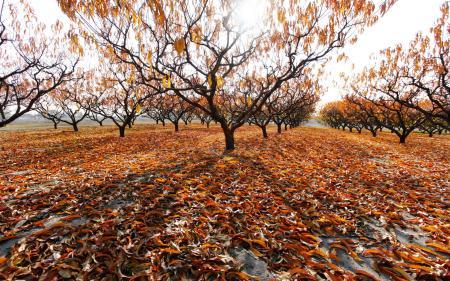 Фотографии сад, осень, деревья, листья