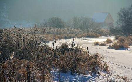 Заставки зима, вечер, река, камыш