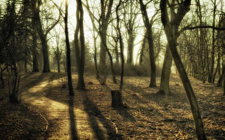 Картинки утро, парк, дорога, деревья
