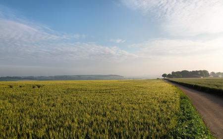 Заставки поле, дорога, пейзаж