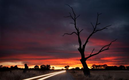 Заставки ночь, дорога, дерево, свет