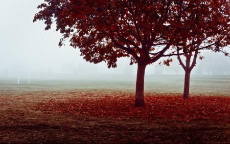 Фото осень, поле, ворота, туман