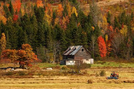 Фотографии осень, поле, лес, дом