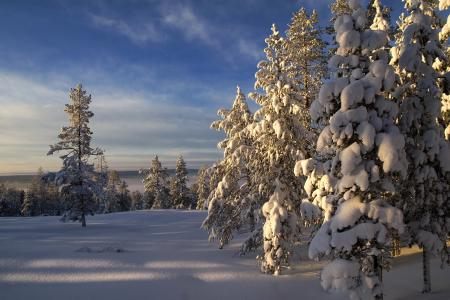 Заставки зима, снег, деревья, небо