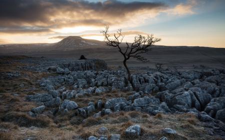 Обои поле, камни, дерево, пейзаж