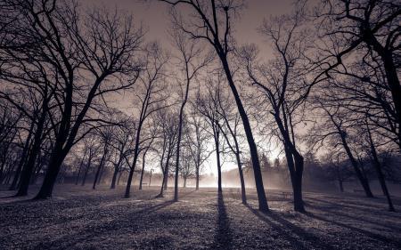 Картинки утро, парк, пейзаж