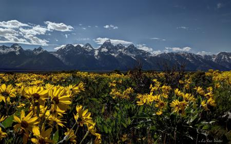 Фото Rocky Mountains, Grand Teton National Park, Wyoming, Скалистые горы