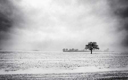 Обои зима, пустырь, дерево, снег
