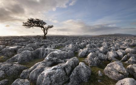Фотографии дерево, небо, камни