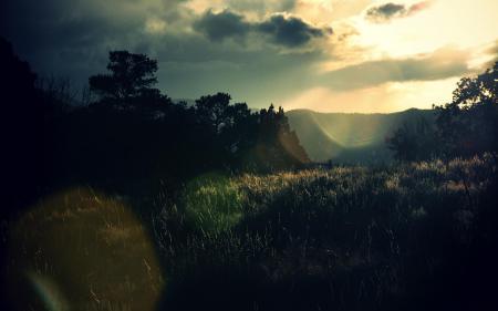 Картинки природа, пейзаж, растения, трава