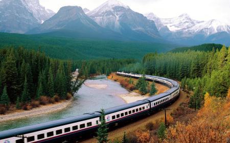 Фото лес, поезд, состав, вагоны