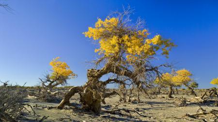 Фотографии дерево, небо, камни, песок