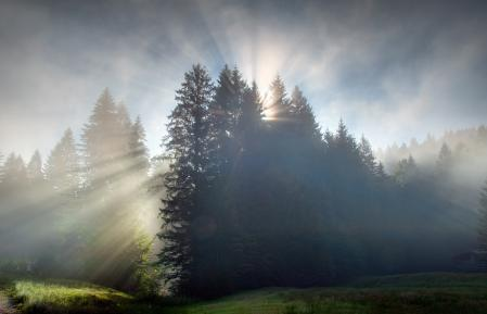 Обои лучи солнца, лес, утро, рассвет