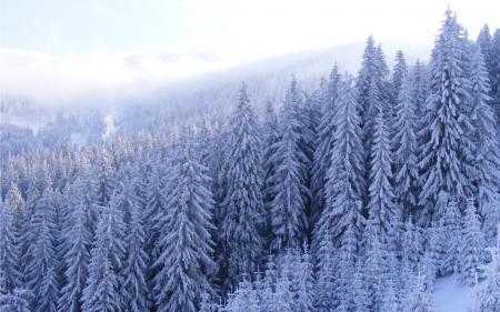 Картинки Frozen, морозно, зима, лес