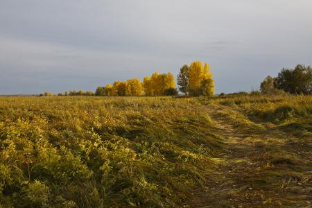 Заставки Осень, даль, деревья