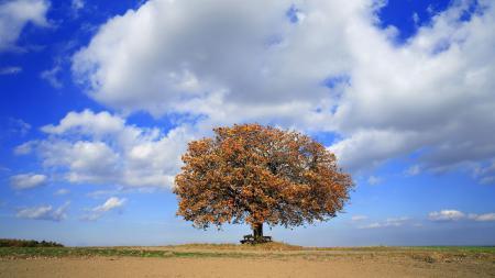 Фото дерево, скамейка, небо