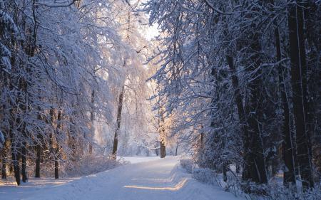 Фото зима, снег, солнце, павловск