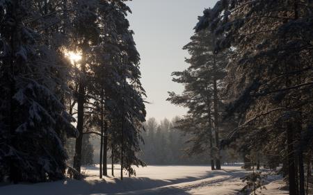 Картинки зима, снег, солнце, павловск