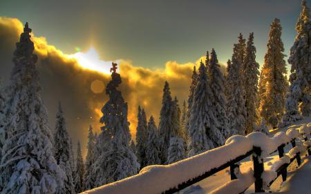 Картинки зима, горы, лес, свет