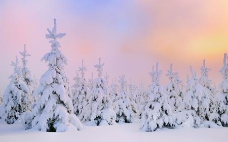 Заставки рассвет, елки, зима, снег