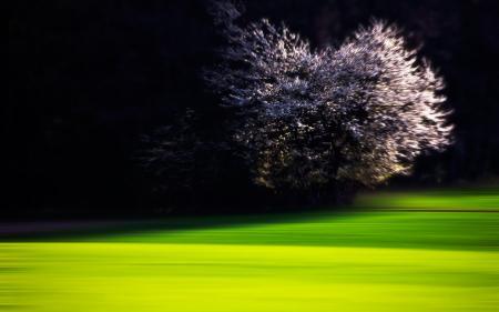Обои ночь, лужайка, дерево